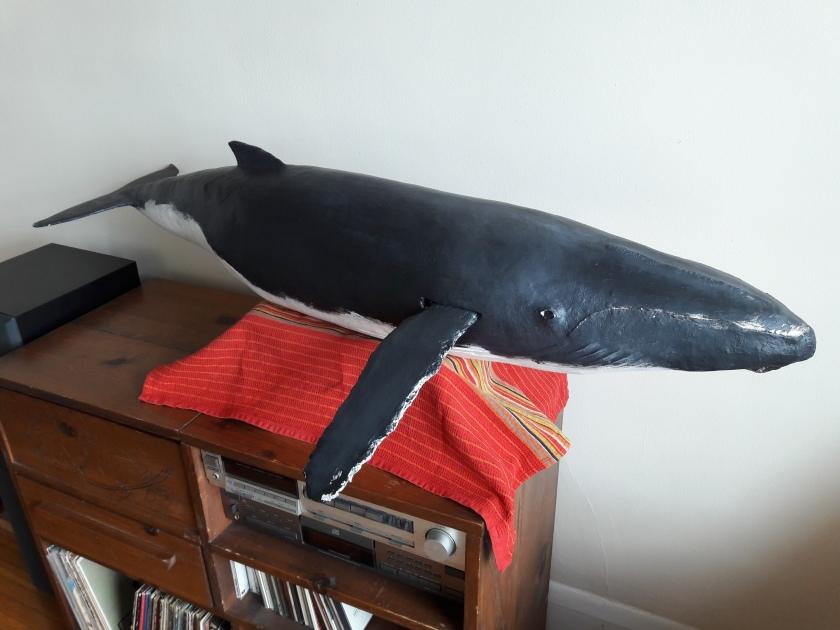 whale 20200610